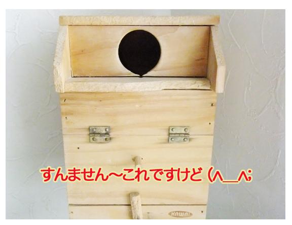 マメルリハ巣箱